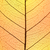 background of autumn colors leaf cell structure   natural textur stock photo © taiga