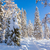 beautiful winter sunny weather in forest stock photo © taiga