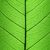 folha · verde · célula · estrutura · macro · textura · tiro - foto stock © taiga