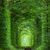 wonder of nature   real tunnel of love green trees stock photo © taiga