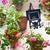 janela · lâmpada · flor · detalhes · casa · velha · dentro - foto stock © taiga