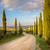 Toskania · zachód · słońca · drogowego · drzew · domu - zdjęcia stock © taiga