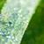 gotas · de · água · folha · verde · super · macro · ecologia · grama - foto stock © taiga