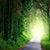 road in magic dark forest from darkness to light stock photo © taiga