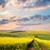 yellow flowering fields ground road and beautiful valley stock photo © taiga