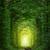 Fantastic Trees - Tunnel of Love with fairy light  stock photo © Taiga