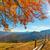 tölgy · reggel · köd · égbolt · fa · tavasz - stock fotó © taiga