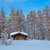 winter forest landscape after blizzard stock photo © taiga