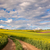 yellow flowering fields and ground road overlooking a valle stock photo © taiga