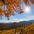 dourado · luz · montanhas · céu · natureza · árvores - foto stock © taiga