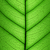 green leaf cell structure background   macro texture stock photo © taiga