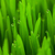 fresh spring green grass with drops vertical stock photo © taiga