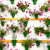 flower decoration of the wall   old european town cordoba spa stock photo © taiga