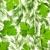 свежие · петрушка · лист · изолированный · белый · фон - Сток-фото © taiga