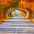 outono · estrada · mata · colorido · árvore - foto stock © taiga