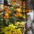 najaar · bos · zonnestralen · weg · hout · bomen - stockfoto © taiga