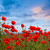 amazing poppy field landscape against colorful sky stock photo © taiga