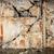 風化した · ひびの入った · 古い · 石膏 · 壁 · 表面 - ストックフォト © taigi