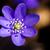 vad · vaddisznó · erdő · tavasz · fa · tavasz - stock fotó © taigi