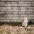 imádnivaló · szürke · macska · narancs · szemek · ül · néz - stock fotó © taigi
