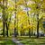 jesienią · spadek · lasu · ścieżka · czerwony · pozostawia - zdjęcia stock © taigi