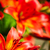 цветок · тигр · Лилия · аннотация · фон · синий - Сток-фото © taigi