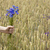 grano · bouquet · tela · raccolto · tempo · ringraziamento - foto d'archivio © taigi