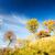 beautiful autumn trees stock photo © taigi