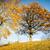 chêne · vert · prairie · ciel · lumière · nuages - photo stock © taigi