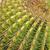 кактус · лист · саду · пустыне · земле - Сток-фото © tang90246