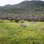 mesa · montana · Ciudad · del · Cabo · vista · superior · Sudáfrica - foto stock © tang90246