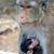 猿 · 赤ちゃん · 草 · 顔 · 自然 · 子 - ストックフォト © tangducminh