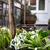 impianti · fiori · erbe · giardino · giardinaggio · verde - foto d'archivio © tannjuska