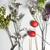 sécher · fleurs · plantes · blanche · fleur - photo stock © tannjuska