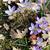 paars · sneeuw · voorjaar · krokus · bloemen · groeiend - stockfoto © tannjuska