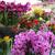 egyezség · orchideák · nagy · virágmintás · fonott · kosár - stock fotó © tannjuska