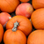 big mix of halloween pumpkins fall stock photo © tannjuska