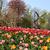 holland · tulpen · veld · prachtig · levendig · bloem - stockfoto © tannjuska