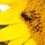 Biene · Blume · Blumen · Hintergrund · Sommer - stock foto © tarczas