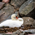 swan sitting in the nest on stone stock photo © tarczas