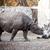 rhinoceros at the zoo stock photo © tarczas