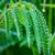 friss · fű · cseppek · harmat · fény · zöld - stock fotó © tasipas