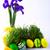 синий · Iris · зеленый · фиолетовый · цветок · весны - Сток-фото © tasipas
