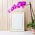 蘭 · 紫色 · 花 · 自然 · ギフト · 白 - ストックフォト © tasipas