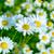 夏 · 野草 · フィールド · 選択フォーカス · 草原 · 花 - ストックフォト © tasipas