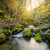 stream · tramonto · acqua · erba · legno · foglia - foto d'archivio © tasipas