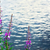 Blossom · дерево · синий · воды · побережье · острове - Сток-фото © tasipas