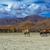 deve · çim · güneş - stok fotoğraf © tasipas