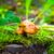 森林 · キノコ · 画像 · フィールド · 公園 - ストックフォト © tasipas