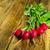 fraîches · radis · laisse · bleu · alimentaire - photo stock © tasipas